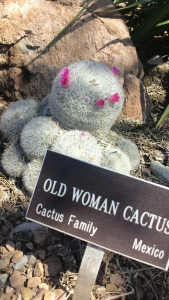 Old Woman Cactus
